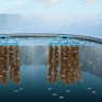 BRISK SAFETY AS aquaculture solutions